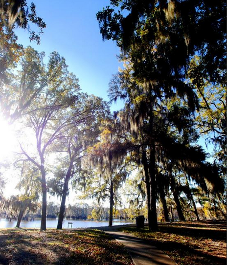11 Under Appreciated State Parks In Louisiana You Re Sure