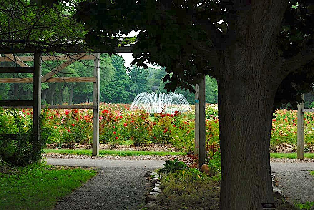 Ohio 39 s secret garden the columbus park of roses for Columbus spring