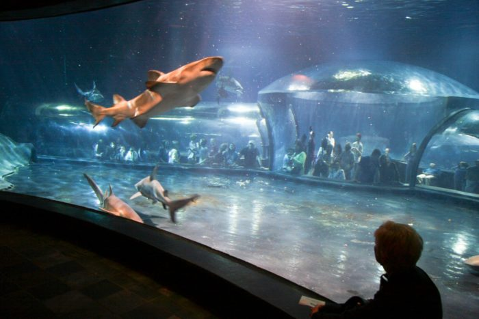 Oklahoma aquarium discount coupons