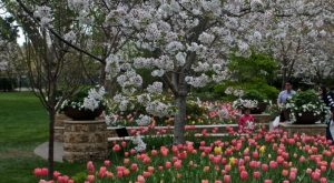 The One Mesmerizing Place In Texas Where Cherry Blossoms Abound