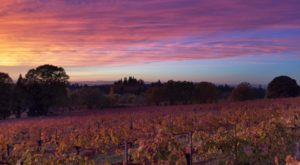 The Remote Winery In Northern California That's Picture Perfect For A Day Trip