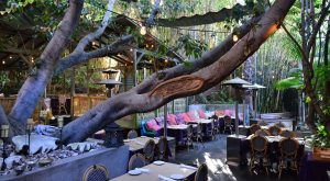 The Treehouse Restaurant In Southern California That's Straight Out Of A Fairytale