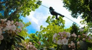 The Epic Zipline In Massachusetts That Will Take You On An Adventure Of A Lifetime