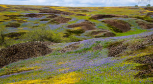 This Breathtaking Field Of Wildflowers In Northern California Looks Like Something From A Dream