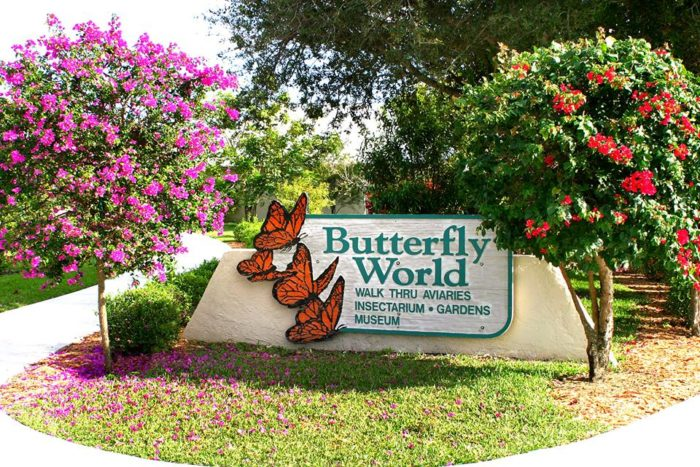 Pictures of florida home butterfly gardens.