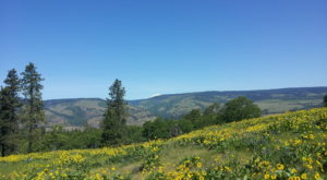 Hike These 5 Amazing Wildflower Trails In and Around Portland To Make Your Spring Complete