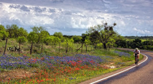 It's Impossible Not To Love This Breathtaking Wild Flower Trail In Texas