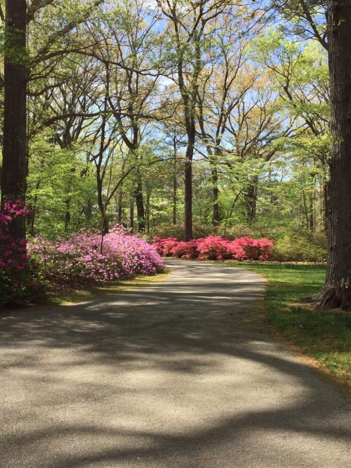 Virginia S Enchanted Forest Walk Is Picture Perfect For Spring