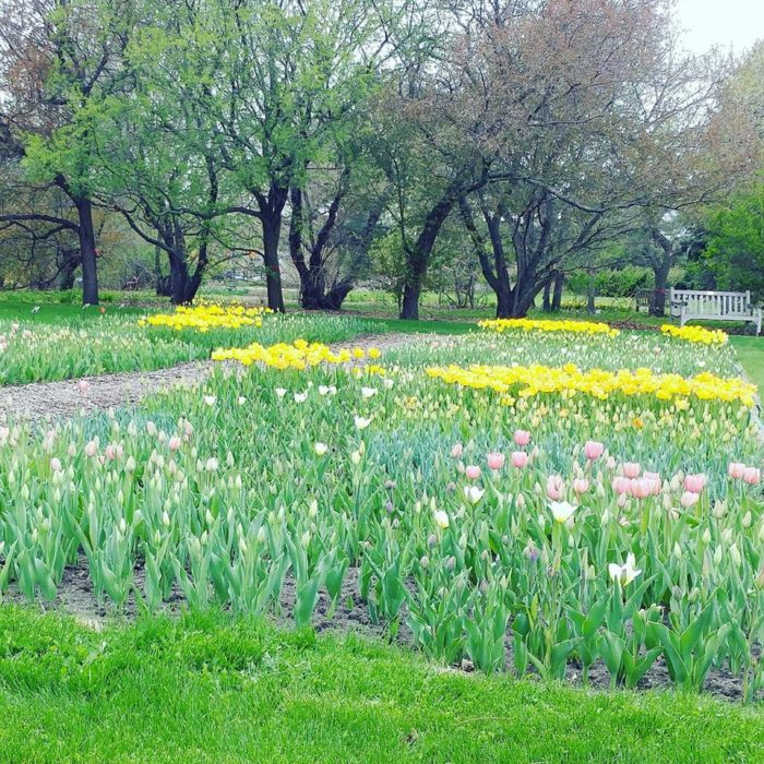 Mccrory Gardens Has One Of The Biggest Tulip Fields In
