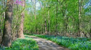 It's Impossible Not To Love This Breathtaking Wild Flower Trail In Maryland