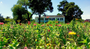 A Trip To New Jersey's Neverending Flower Field Is The Perfect Warm Weather Adventure