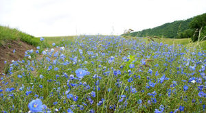 It's Impossible Not To Love This Breathtaking Wild Flower Trail In North Dakota