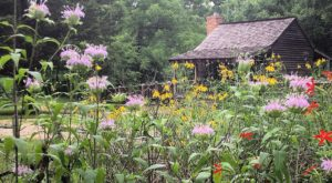 A Trip To Mississippi's Neverending Wildflower Field Will Make Your Spring Complete