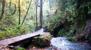 This Amazing Forest Trail In Oregon Will Take You On An Unforgettable Adventure