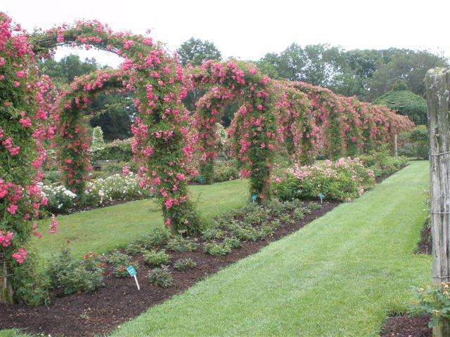 Whole Flowers In Hartford Ct Life Style By