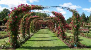 You Must Visit Connecticut's Stunning Tunnel Of Flowers Before Spring Is Over