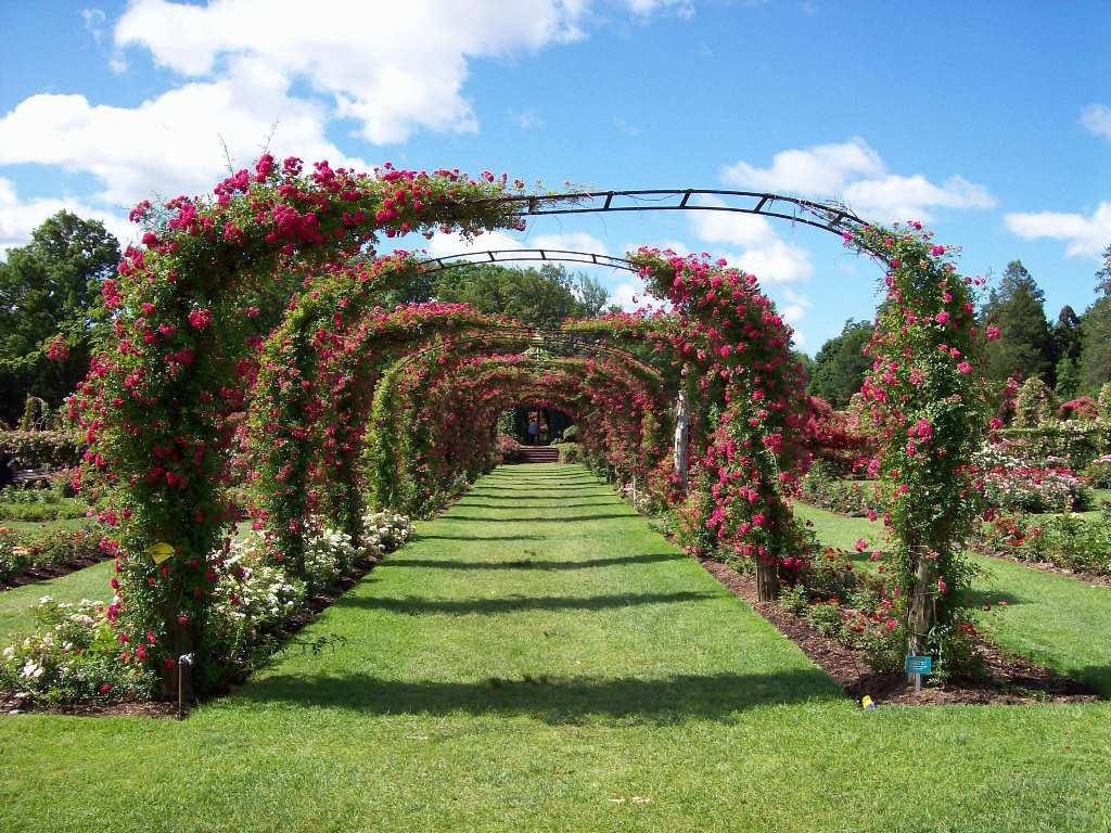 Elizabeth Park In Connecticut Has A Tunnel Of Flowers