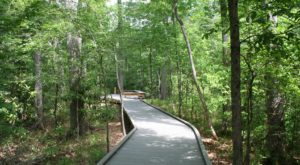 11 Gorgeous Trails In Louisiana Less Than 2 Miles That Nearly Anyone Can Do