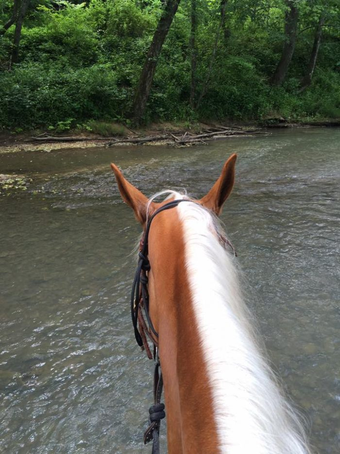 13 Unforgettable Horse-Back Riding Adventures in Kentucky