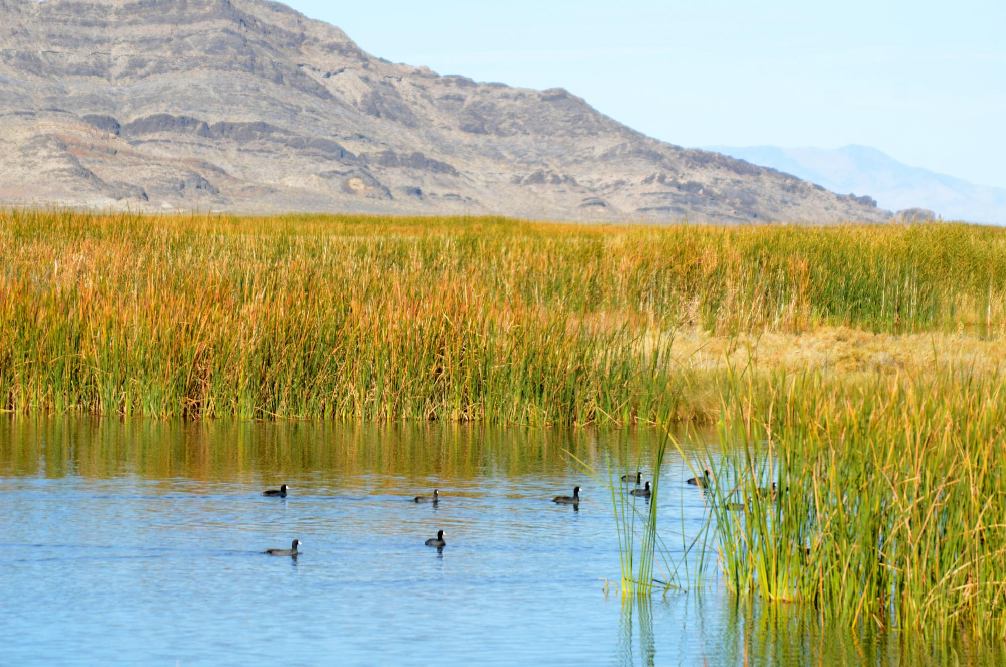 Tooele county the county in utah with some stunning for Fish springs nevada