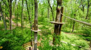 The Epic Zipline Near Washington DC That Will Take You On An Adventure Of A Lifetime