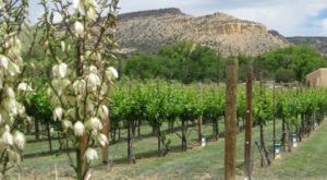 9 Beautiful Wineries In New Mexico That Are Perfect For A Day Trip