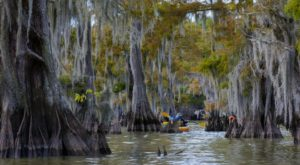 The Country's Largest Swamp Is Right Here In Louisiana And You'll Want To Visit