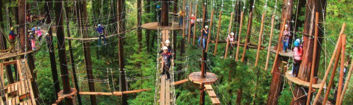 Redwood Canopy Tours Is The Best Zipline In San Francisco