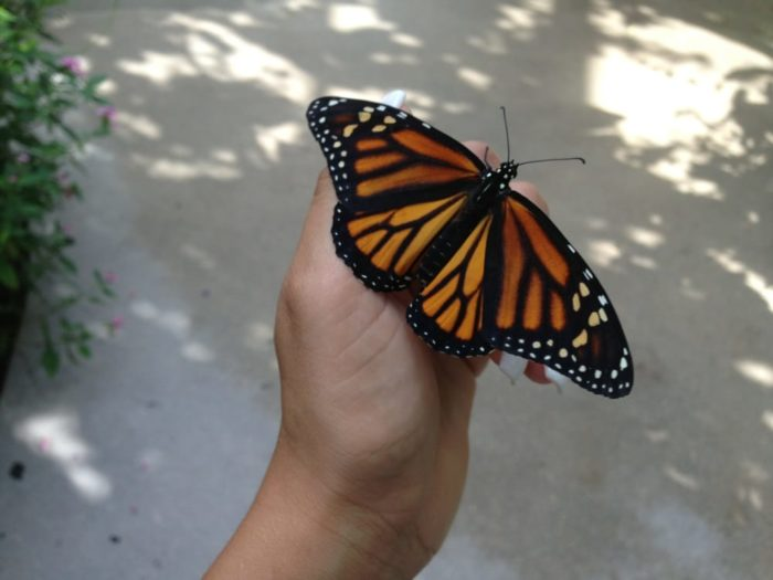 the world u2019s largest butterfly park is right here in florida and you u2019ll want to visit