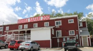 You'll Absolutely Love A Trip To This Little Known Safari Zoo In Nevada