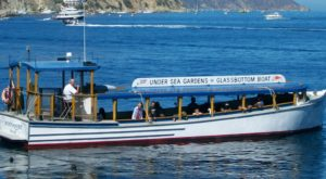 The Amazing Glass-Bottomed Boat Tour In Southern California Will Bring Out The Adventurer In You