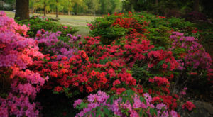 A Trip To Oklahoma's Neverending Azalea Field Will Make Your Spring Complete