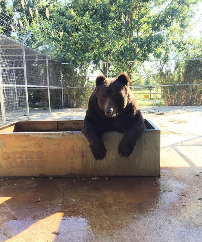 Greater Wynnewood Exotic Animal Sanctuary Is A Must Visit