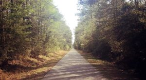 The 5 Most Beautiful Bike Trails You Can Take In New Orleans
