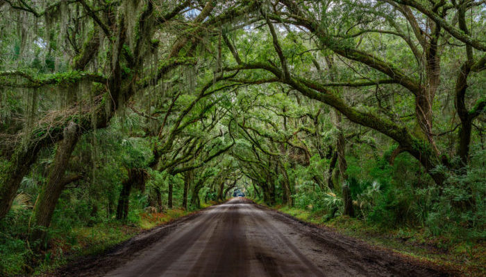 9 Positively Magical Tree Tunnels In South Carolina That