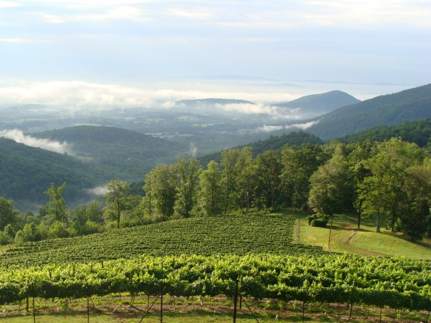 6 Top Wineries Near Washington, D.C.   Travel   US News