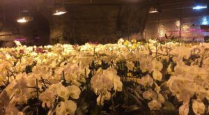 Most People Have No Idea This Stunning Orchid Cave Deep Below Missouri Exists