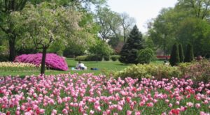 A Trip To Maryland's Neverending Tulip Garden Will Make Your Spring Complete