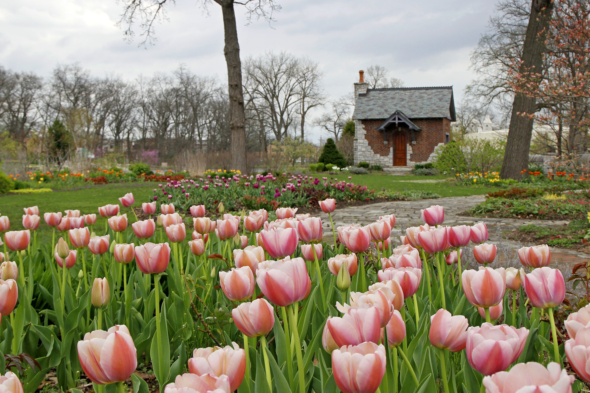 Wellfield Botanic Gardens Has The Most Colorful Tulip