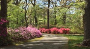 You Need To See Virginia's Enchanted Flower Forest For Yourself Before Spring Is Over