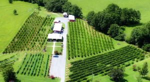 The Remote Winery In Alabama That's Picture Perfect For A Day Trip