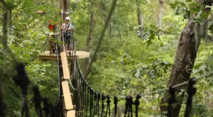 The Epic Canopy Course In South Carolina That Will Bring Out The Adventurer In You