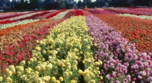 This Enchanting Flower Farm In Oregon Is Pure Magic And You'll Want To Visit