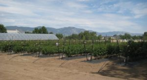 You'll Never Forget Your Trip To This Picture Perfect Nevada Berry Farm