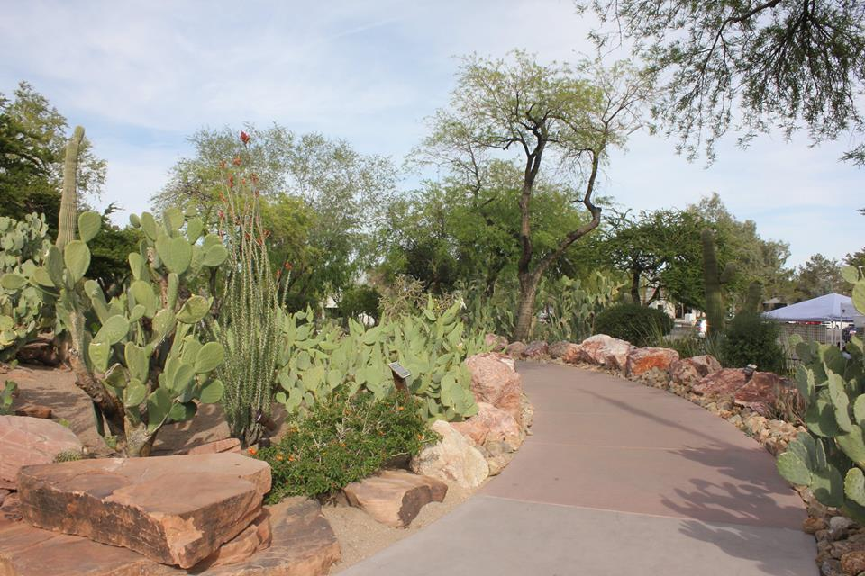 The Largest Botanical Cactus Garden In The Southwest Is