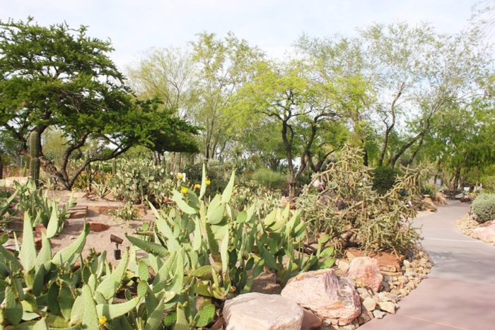 The Garden Features Four Acres Of Drought Tolerant Ornamental Plants,  Cacti, And Other Desert Friendly Succulents.