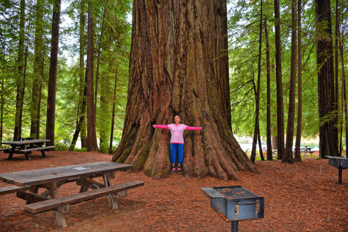 2 Visit The Redwood State And National Parks