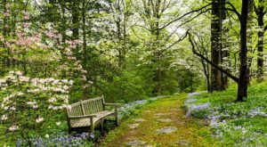 It's Impossible Not To Love This Breathtaking Wild Flower Trail In Delaware