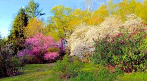 There's No Better Place Than This Huge Lilac Garden Hiding In Massachusetts