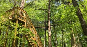 The Epic Canopy Course In Nashville That Will Bring Out The Adventurer In You
